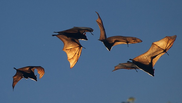 Locate a mobile phone with the technique used by bats and dolphins