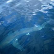 squalo-etereo